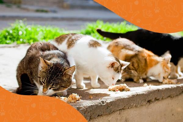 Arca di Noè - Blog | Felini, Fondazione Comunitaria in campo con Amici degli animali