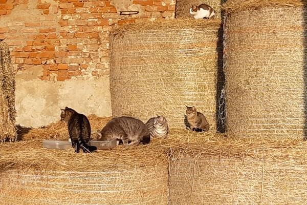 Arca di Noè - Blog | Colonie feline nel lodigiano