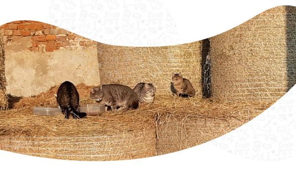 Arca di Noè - Blog | Raccolta Alimentare
