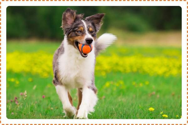 Arca di Noè - Giochi per cani