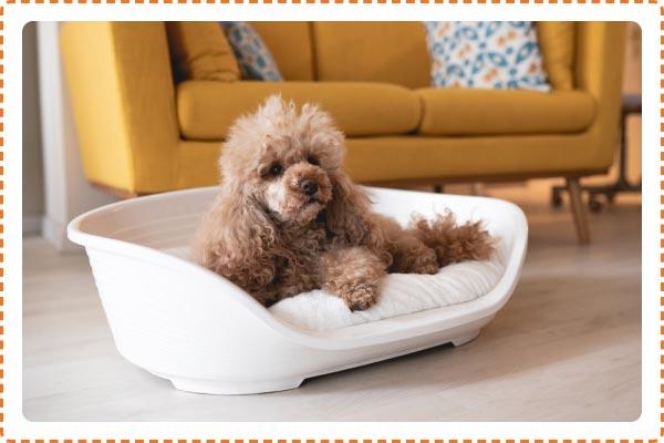 Arca di Noè - Cuccia con cuscino per cani