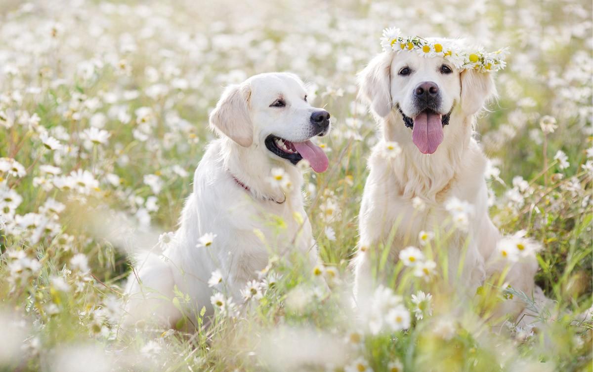 Arca di Noè - Blog | Antiparassitari per cani