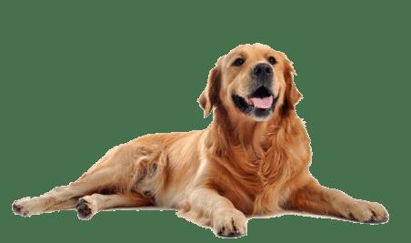 Arca di Noè - Umido e Secco per Cani promozione Purina